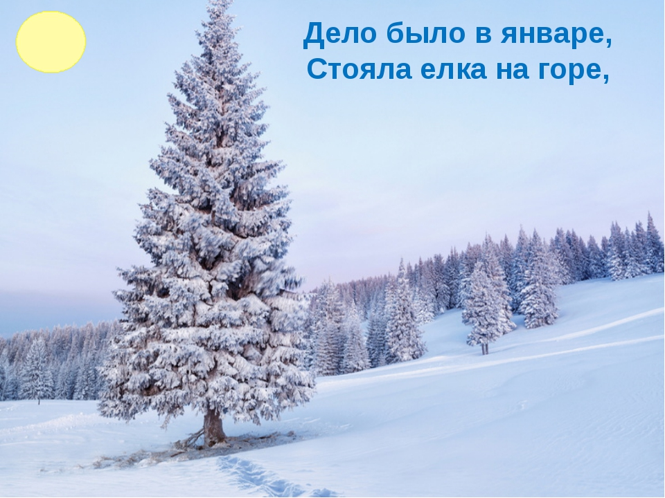 Дело было в январе, Стояла елка на горе,