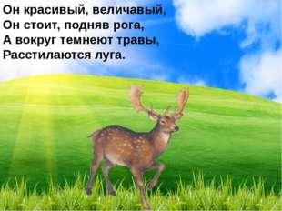 Он красивый, величавый, Он стоит, подняв рога, А вокруг темнеют травы, Рассти