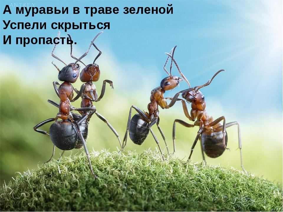 А муравьи в траве зеленой Успели скрыться И пропасть.