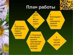 План работы 5. Практическая работа 4. Взаимодействие подотделов нервной систе