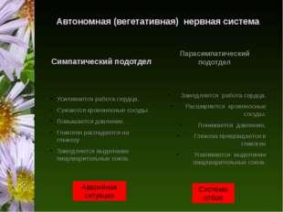 Автономная (вегетативная) нервная система Симпатический подотдел Усиливается