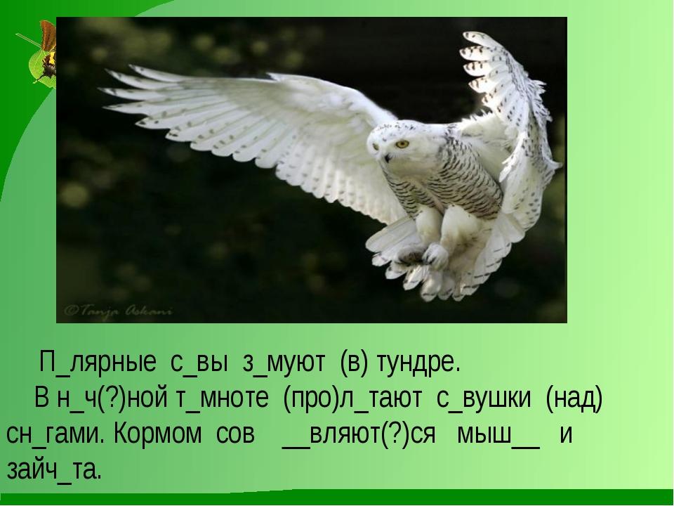 П_лярные с_вы з_муют (в) тундре. В н_ч(?)ной т_мноте (про)л_тают с_вушки (на...