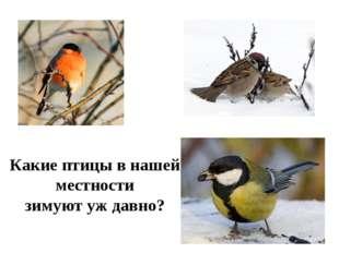 Какие птицы в нашей местности зимуют уж давно?