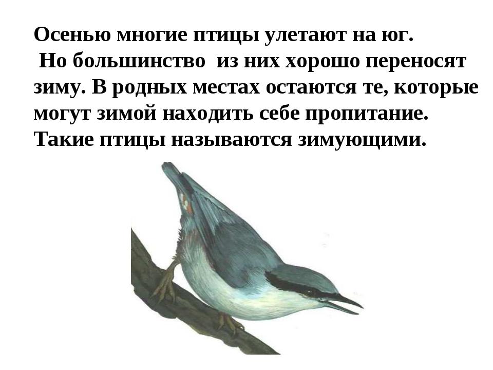 Осенью многие птицы улетают на юг. Но большинство из них хорошо переносят зим...