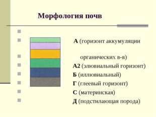 Морфология почв А (горизонт аккумуляции органических в-в) А2 (элювиальный го