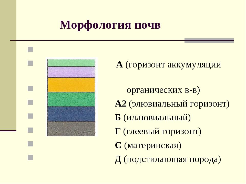 Морфология почв А (горизонт аккумуляции органических в-в) А2 (элювиальный го...