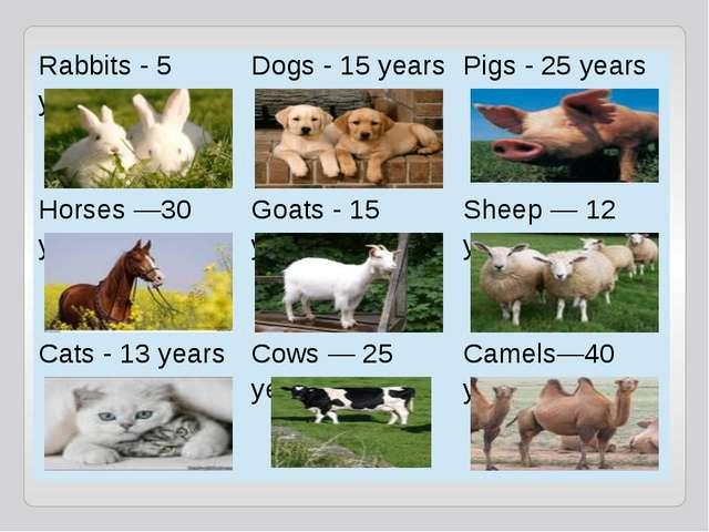 Rabbits - 5 years Dogs - 15 years Pigs - 25 years Horses —30 years Goats - 15...