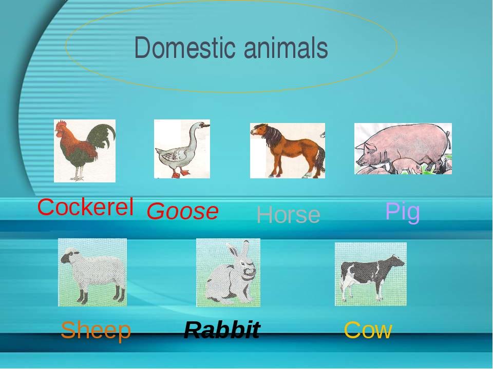 Domestic animals Cockerel Goose Pig Horse Sheep Rabbit Cow