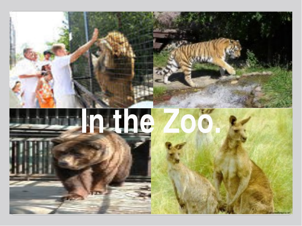 In the Zoo.