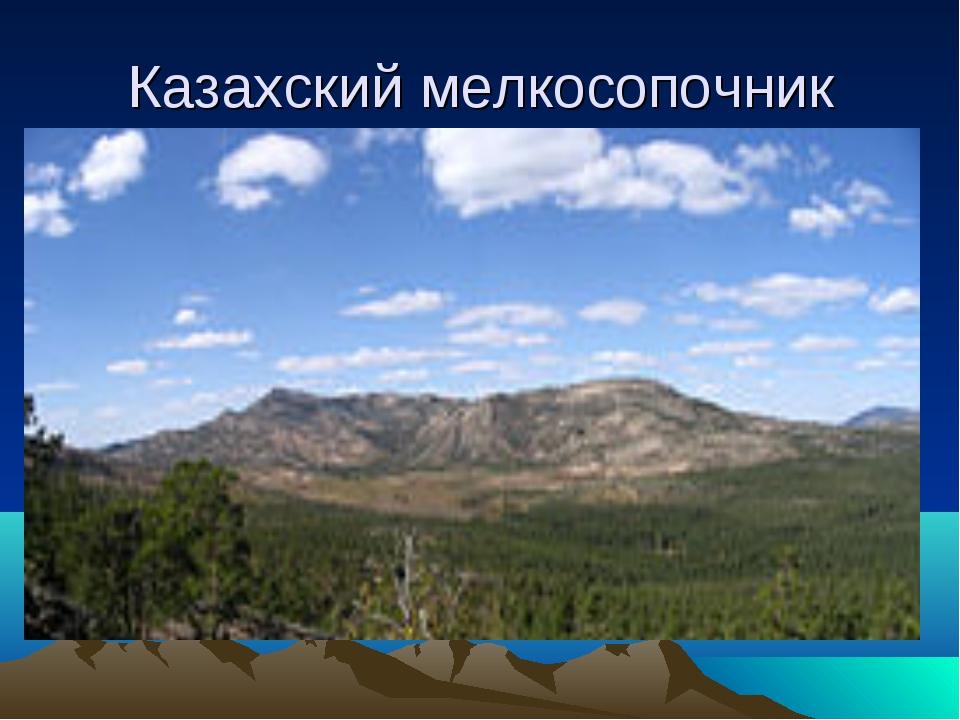Казахский мелкосопочник