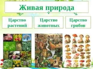 Живая природа Царство растений Царство животных Царство грибов