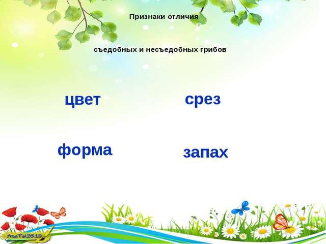 Признаки отличия съедобных и несъедобных грибов цвет срез запах форма