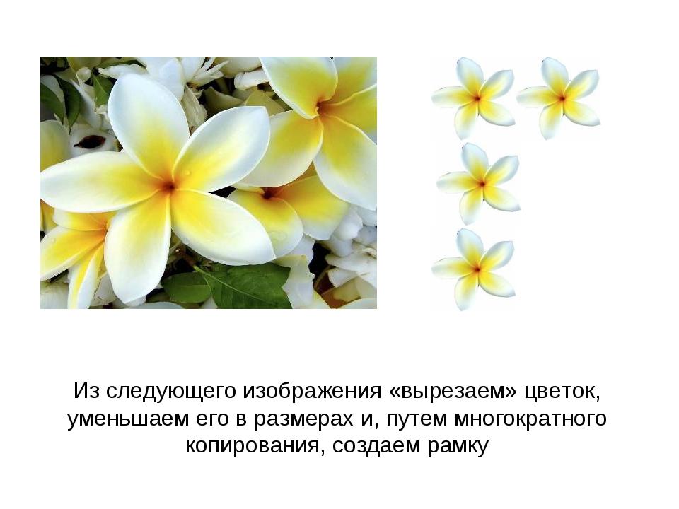 Из следующего изображения «вырезаем» цветок, уменьшаем его в размерах и, путе...