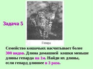 Семейство кошачьих насчитывает более 300 видов. Длина домашней кошки меньше д