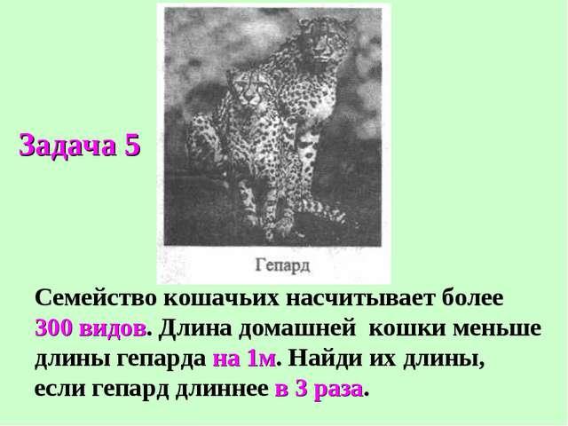 Семейство кошачьих насчитывает более 300 видов. Длина домашней кошки меньше д...