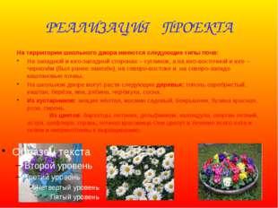 РЕАЛИЗАЦИЯ ПРОЕКТА На территории школьного двора имеются следующие типы почв: