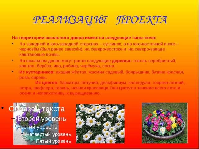 РЕАЛИЗАЦИЯ ПРОЕКТА На территории школьного двора имеются следующие типы почв:...