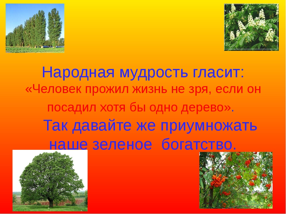 Народная мудрость гласит: «Человек прожил жизнь не зря, если он посадил хотя...