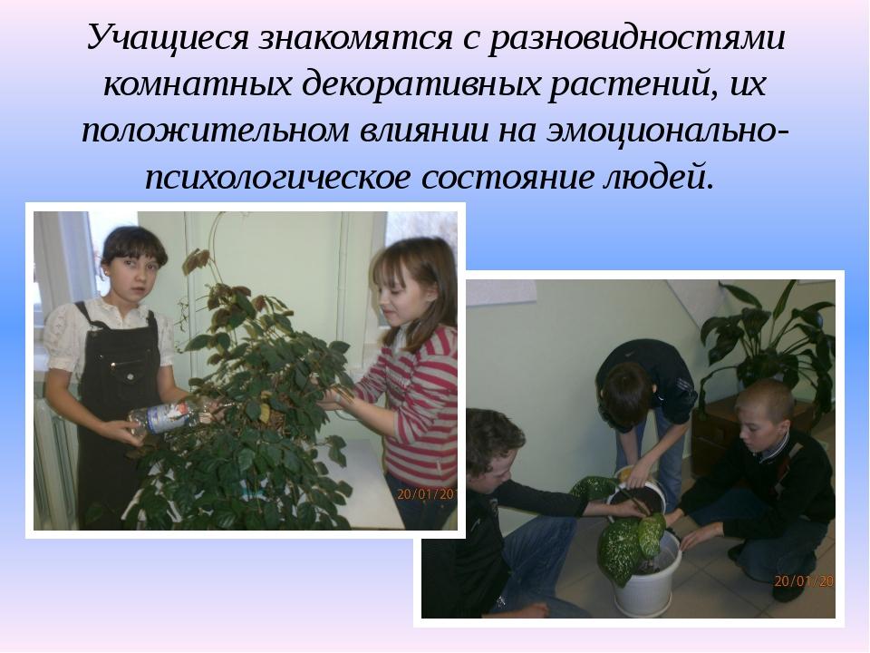 Учащиеся знакомятся с разновидностями комнатных декоративных растений, их пол...