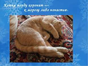 Кошка морду хоронит — к морозу либо ненастью.
