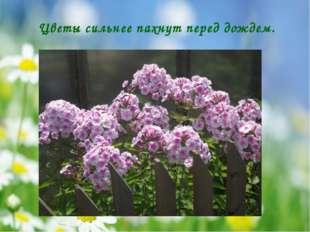 Цветы сильнее пахнут перед дождем.
