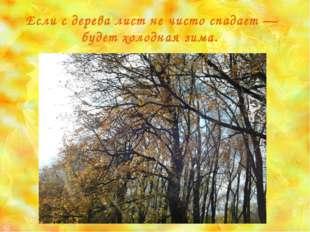 Если с дерева лист не чисто спадает — будет холодная зима.