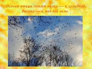 Осенью птицы летят низко — к холодной, высоко — к теплой зиме.