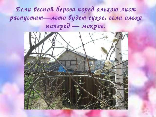 Если весной береза перед ольхою лист распустит—лето будет сухое, если ольха н...