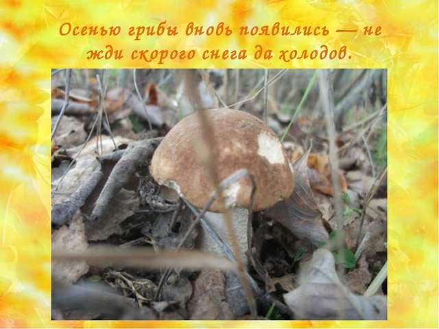 Осенью грибы вновь появились — не жди скорого снега да холодов.