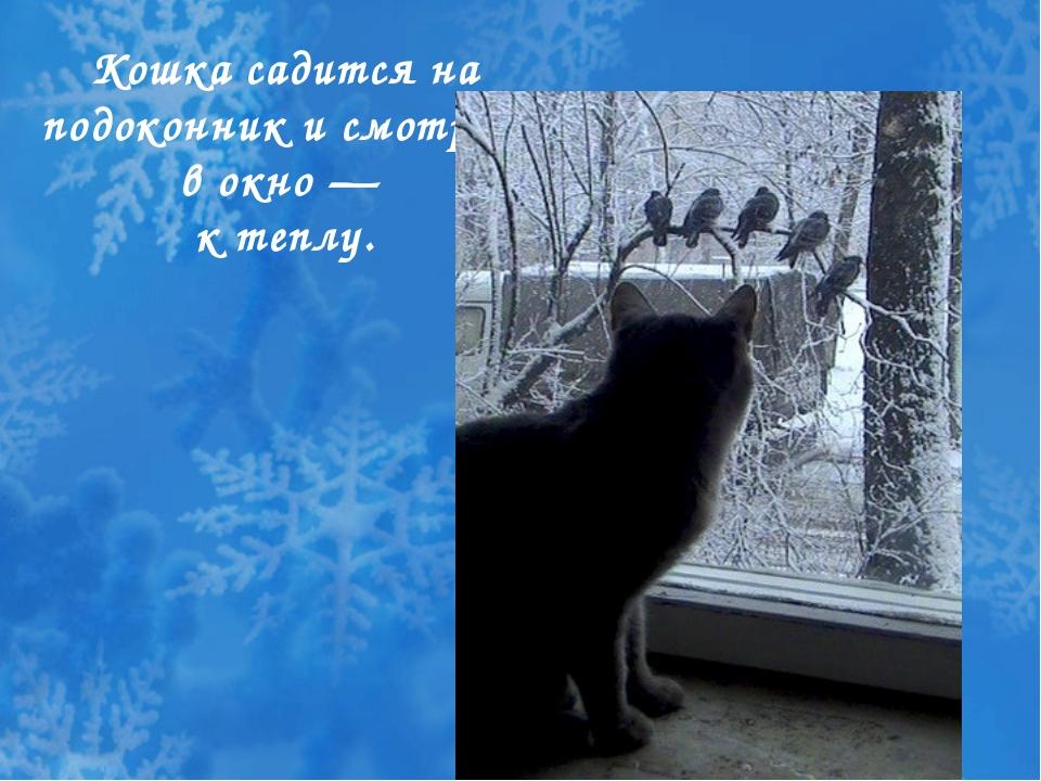 Кошка садится на подоконник и смотрит в окно — к теплу.