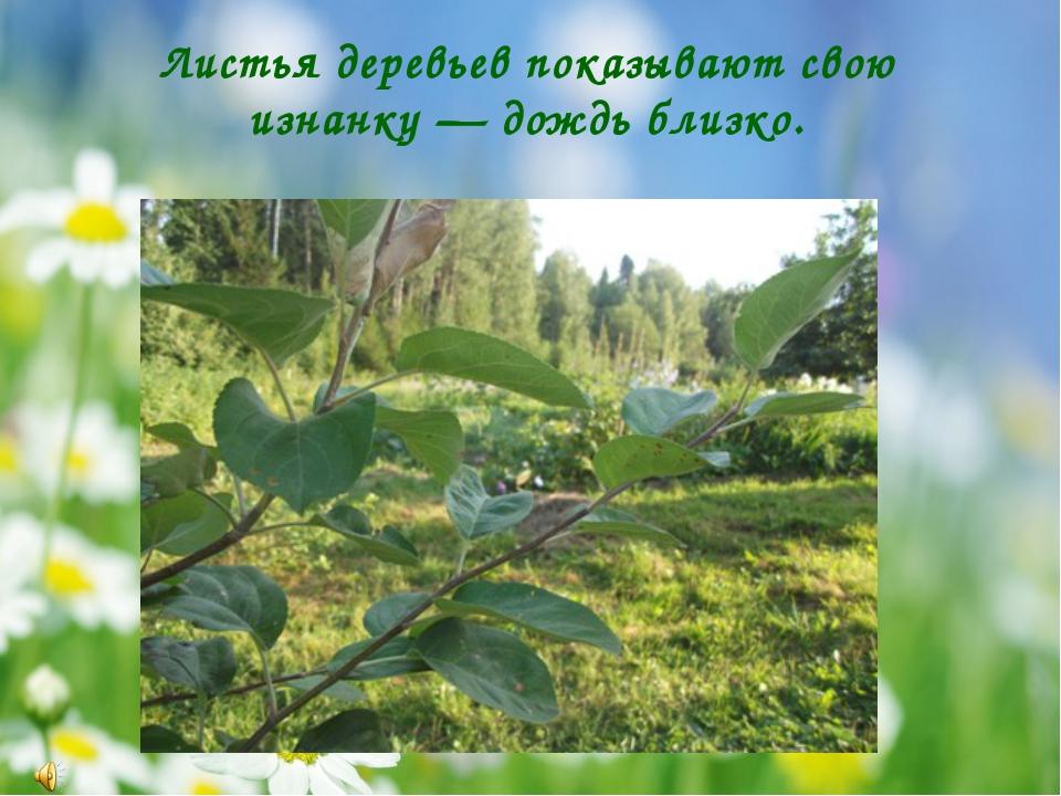 Листья деревьев показывают свою изнанку — дождь близко.