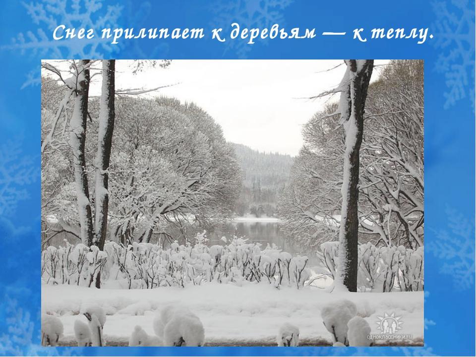 Снег прилипает к деревьям — к теплу.
