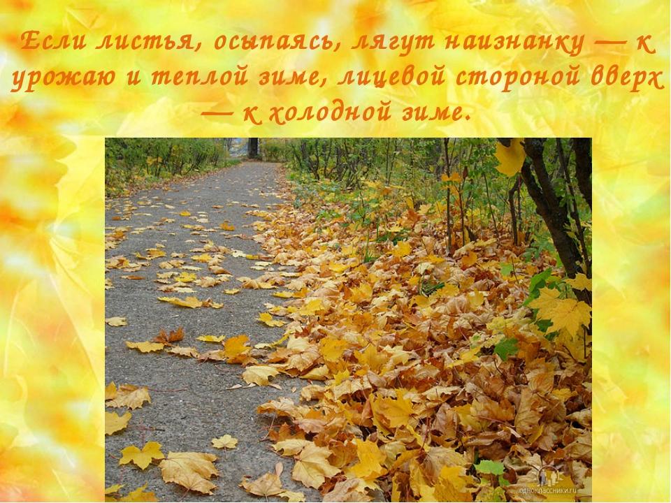 Если листья, осыпаясь, лягут наизнанку — к урожаю и теплой зиме, лицевой стор...