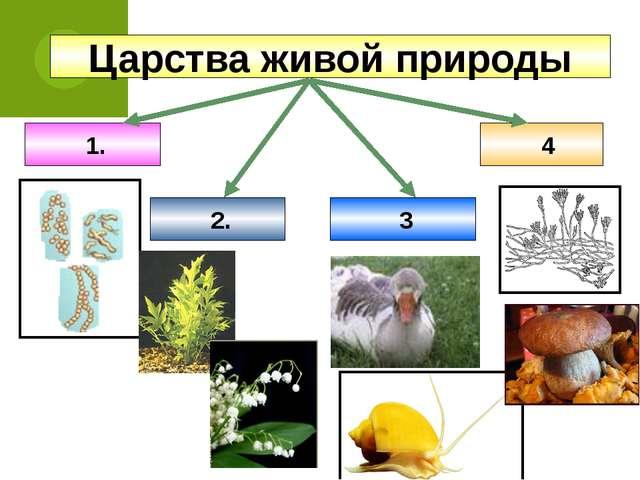 Царства живой природы 1. 4 2. 3