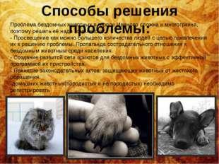 Способы решения проблемы: Проблема бездомных животных в городе Иваново сложна