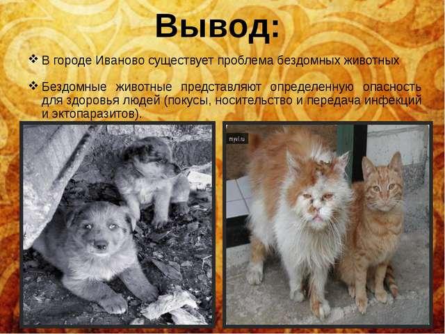 В городе Иваново существует проблема бездомных животных Бездомные животные пр...