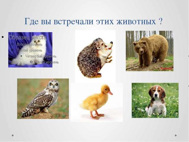 Где вы встречали этих животных ?