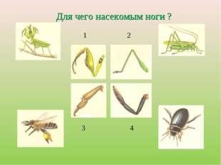 1 2 3 4 Для чего насекомым ноги ?