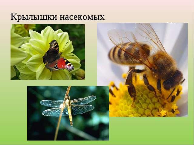 Крылышки насекомых