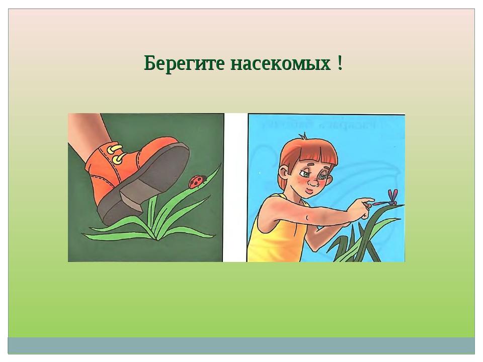 Берегите насекомых !