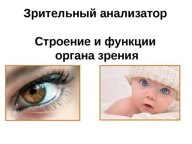 Зрительный анализатор Строение и функции органа зрения