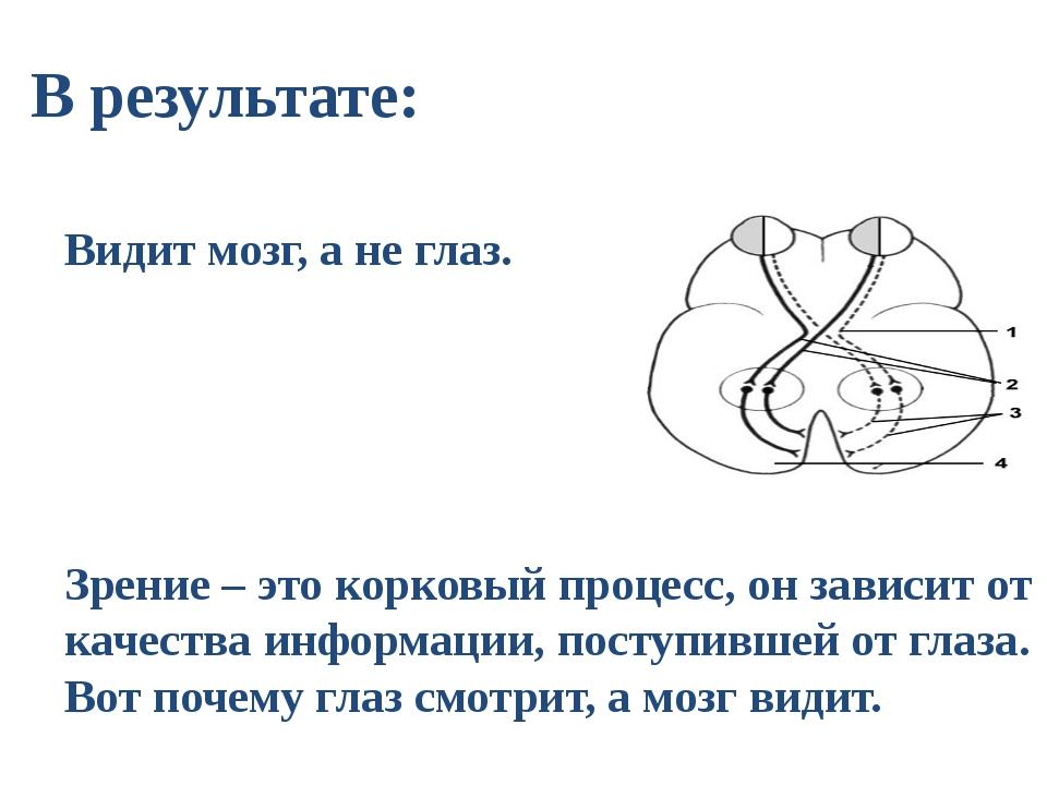 В результате: Видит мозг, а не глаз. Зрение – это корковый процесс, он зависи...