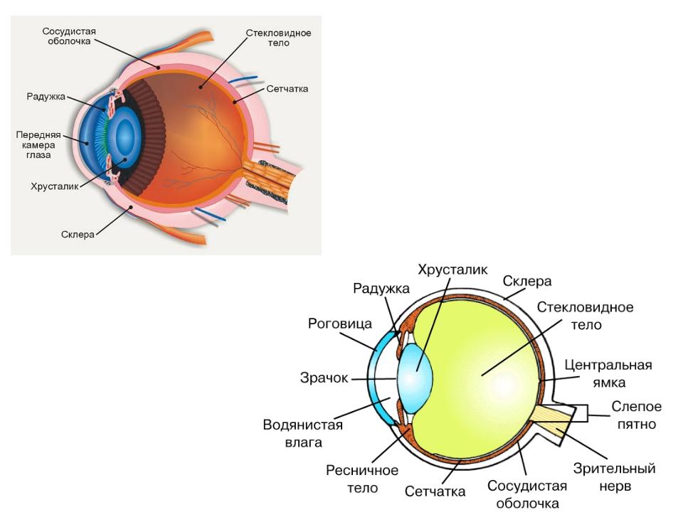 Гдз конспект по биологии класс зрительные анализаторы