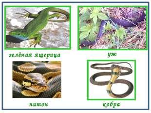 зелёная ящерица уж кобра питон
