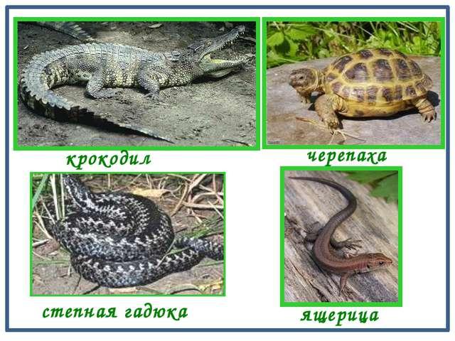 крокодил черепаха ящерица степная гадюка
