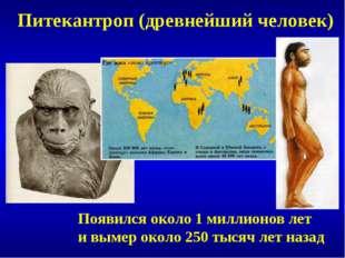 Питекантроп (древнейший человек) Появился около 1 миллионов лет и вымер около