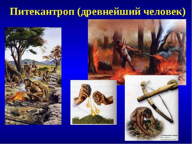 Питекантроп (древнейший человек)