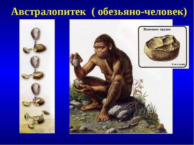 Австралопитек ( обезьяно-человек)