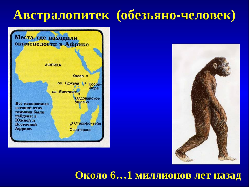 Австралопитек (обезьяно-человек) Около 6…1 миллионов лет назад