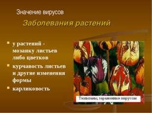 у растений - мозаику листьев либо цветков курчавость листьев и другие изменен